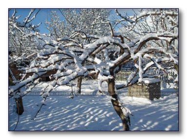 Зимой в саду