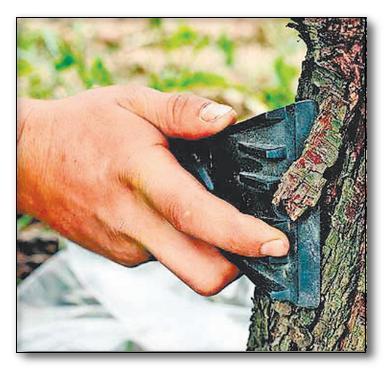 Как лечить яблоню, болезни ствола, коры яблони, обработка