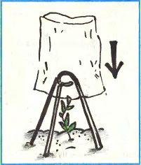 Как самому построить теплицу