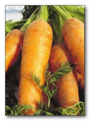 Морковь для зимнего хранения