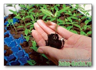 Грунт из сада для рассады