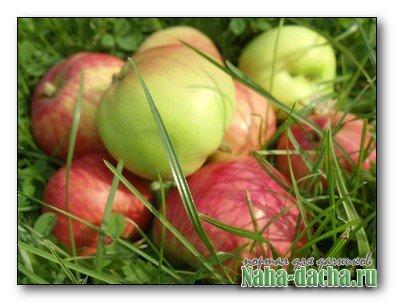 Станок-соковыжималка для яблок и ягод своими руками