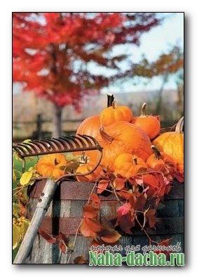 Осенные работы на дачном участке