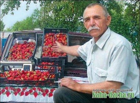 Анатолий Дереза продает свою землянику на рынке. Покупатели есть всегда