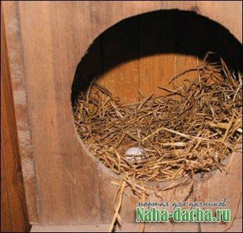 Разведение кур орловской породы
