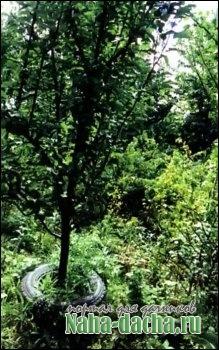 покрышки в саду