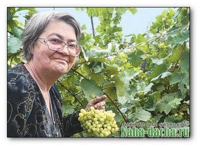 Уход за виноградом от Ульяновой