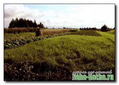Как избавиться от сорняков и улучшить почву