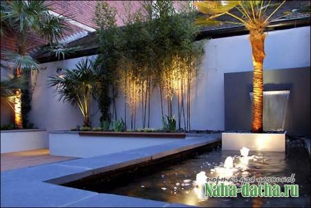 Бамбук в саду