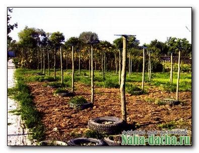 Реконструкция виноградника