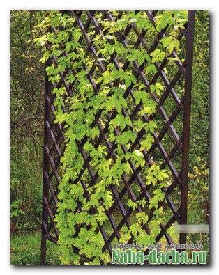 Шпалера деревянная для вьющихся растений