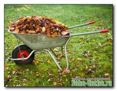 Садово-огородные работы в ноябре