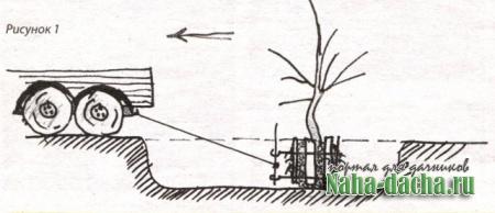 Пересадка крупного дерева
