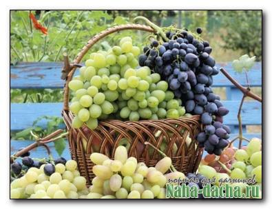 Итоги года на винограднике