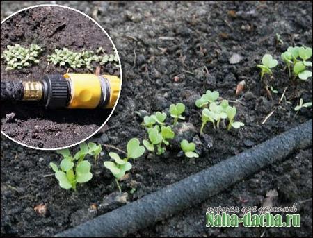 Зона орошения почвы