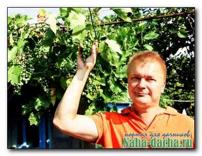 Целебная смесь для винограда