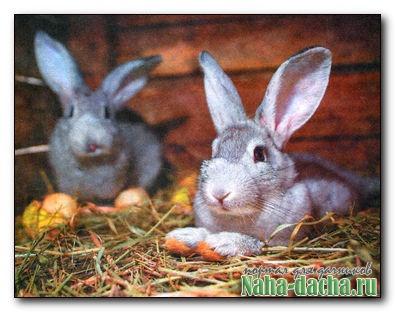 Кролиководство в домашних условиях