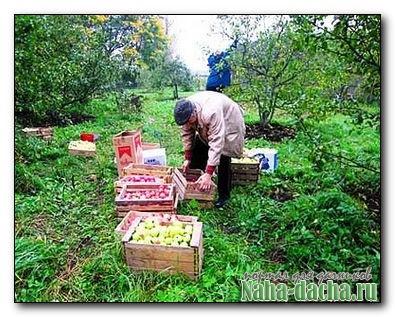 приспособления для съема плодов