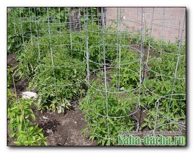 защита и опора томатов