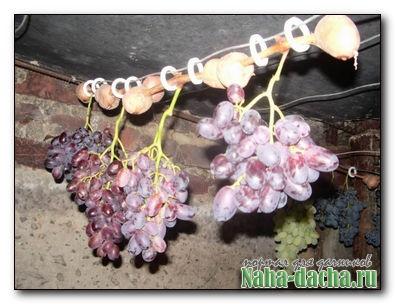 Свежий виноград до весны