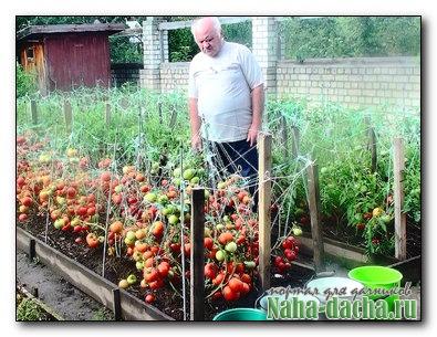 Можно ли с одной грядки снять два урожая