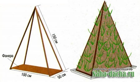 Луковая пирамида