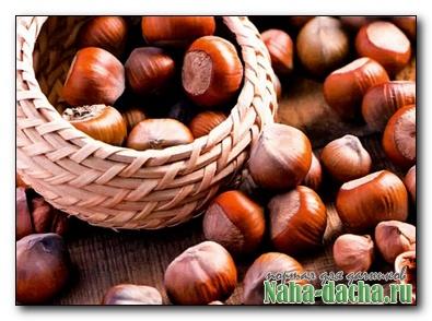 Фундук. Лесной орех выращивание и уход