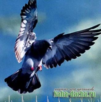 Пять лучших способов отпугнуть птиц