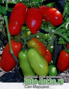 Лучшие сорта томатов, характеристики