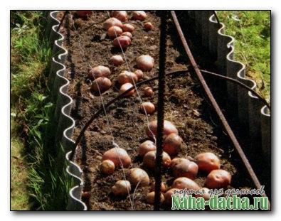 выращивания картофеля