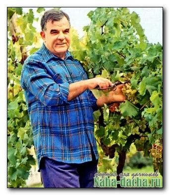 когда зацветает виноград