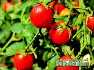 7 мифов об органическом земледелии
