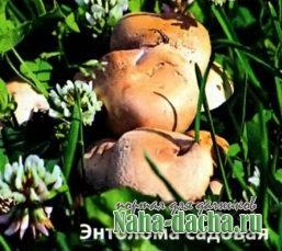 Съедобные, несъедобные, лекарственные грибы