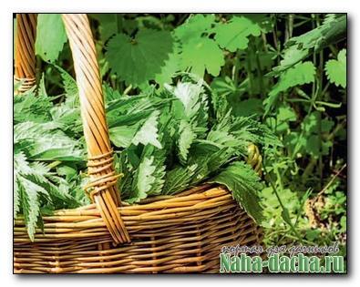 Заготовка лечебных растений
