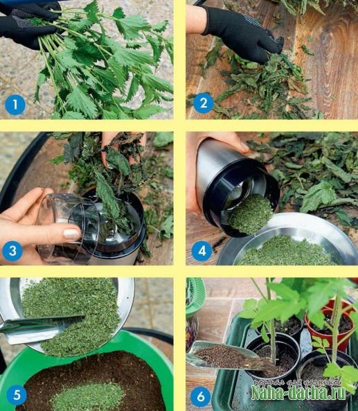 Заготовка лечебных растений - кропива. Мастер - класс