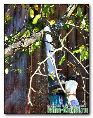 Санитарная обрезка яблони
