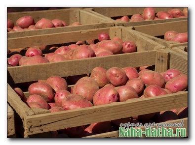 Разборный ящик для картофеля