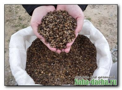 как вырастить рассаду из семян