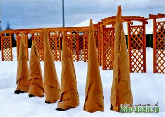 Подготовка растений к зимовке