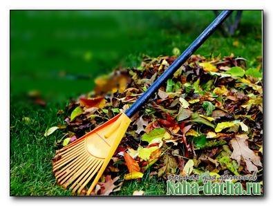 Что делать с опавшими листьям на участке?