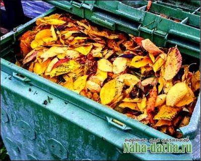 Что делать с опавшими листьям