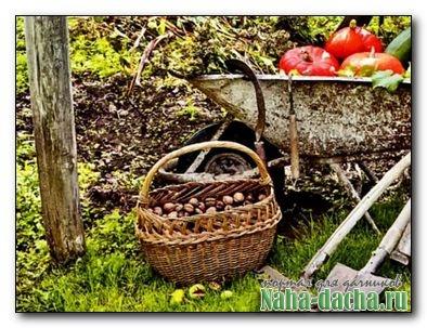 Подготовка растений и весь сад к зиме