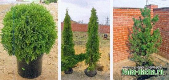 Способы посадки растений