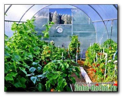 Как получить хороший урожай в теплицах и парниках