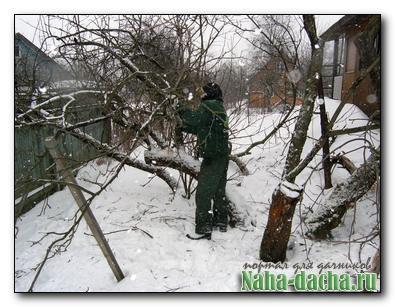 Технология обрезки садовых деревьев
