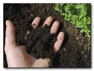 5 шагов, что бы сделать землю плодородной