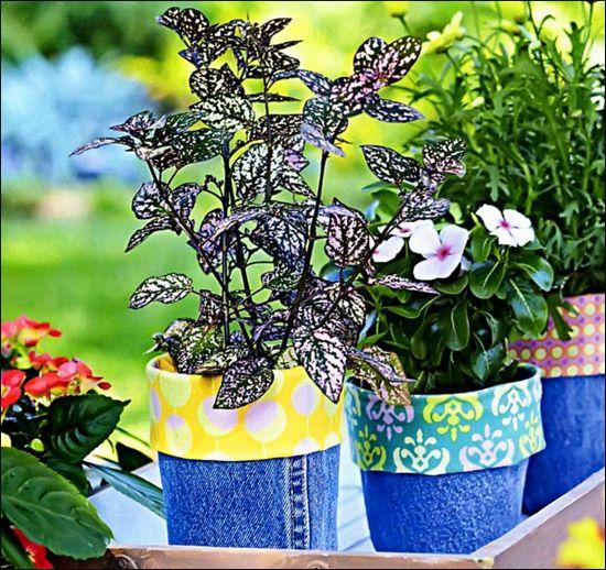 Оживите сад при помощи цветов