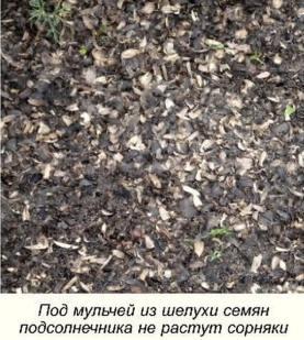 Как вырастить органическую смородину