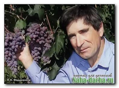 Новая система сибирского виноградарства