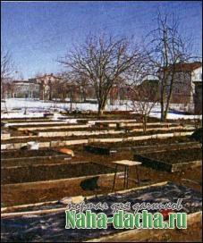 Выращивание моркови трижды за сезон
